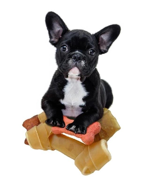 best grain free puppy dog food
