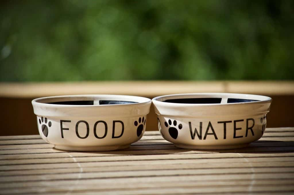 ceramic dog food bowls