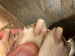 how to clip a dog's nails
