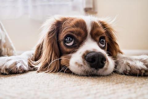 dog state of mind