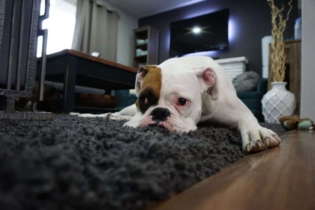 stress and anxiety in dogs