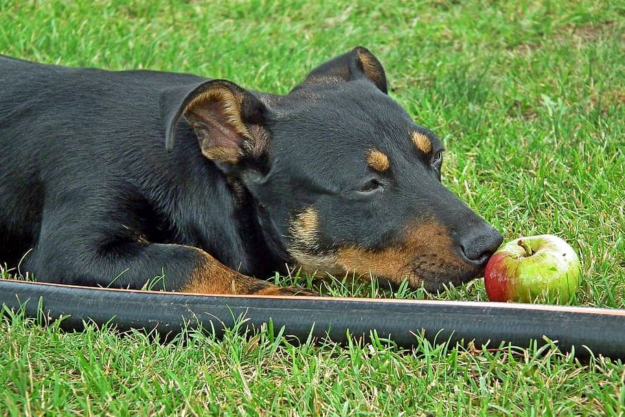 Dog begging for food - causes and solutions