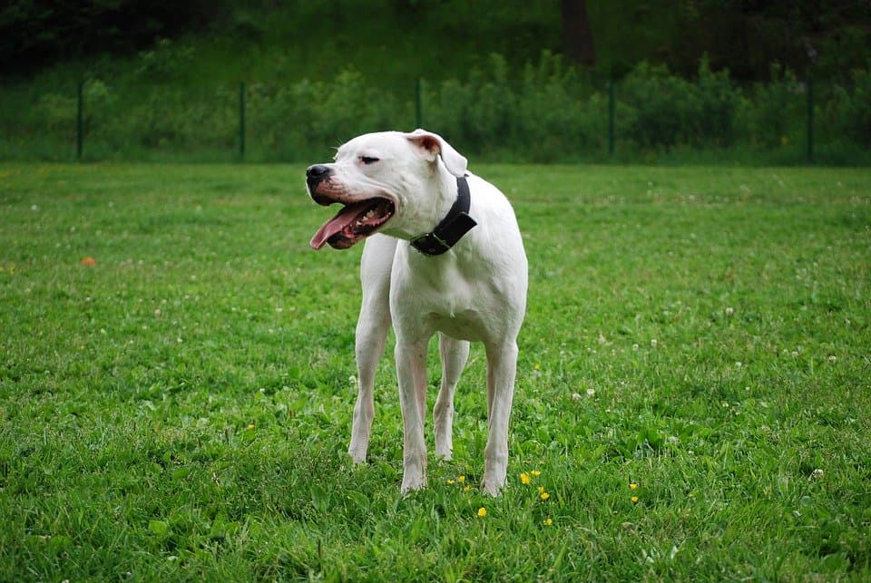 causes of exercise intolerance in dogs