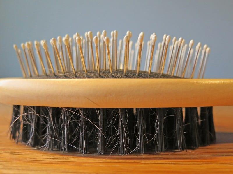 detangle your dog's hair