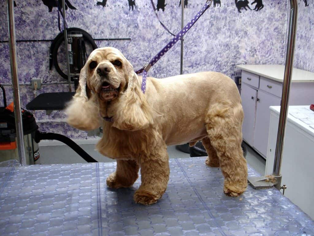 hold your dog while grooming