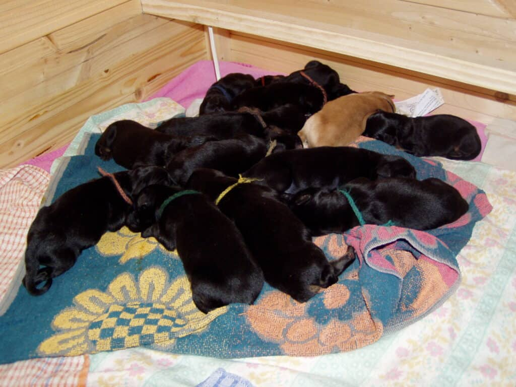 hygiene of the puppies living space