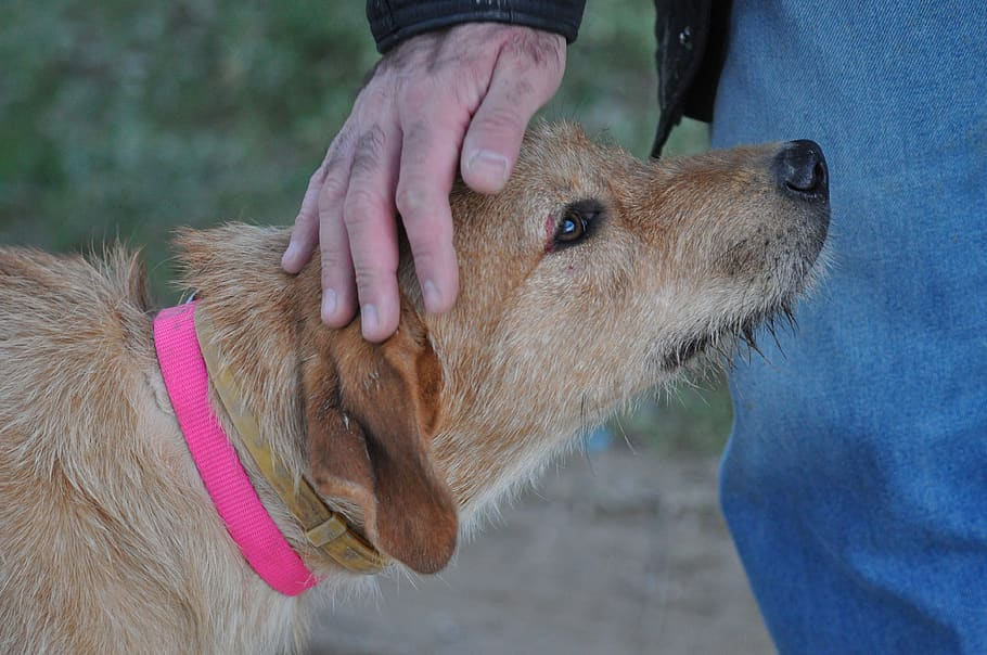 can pneumonia in dogs be transmitted to humans