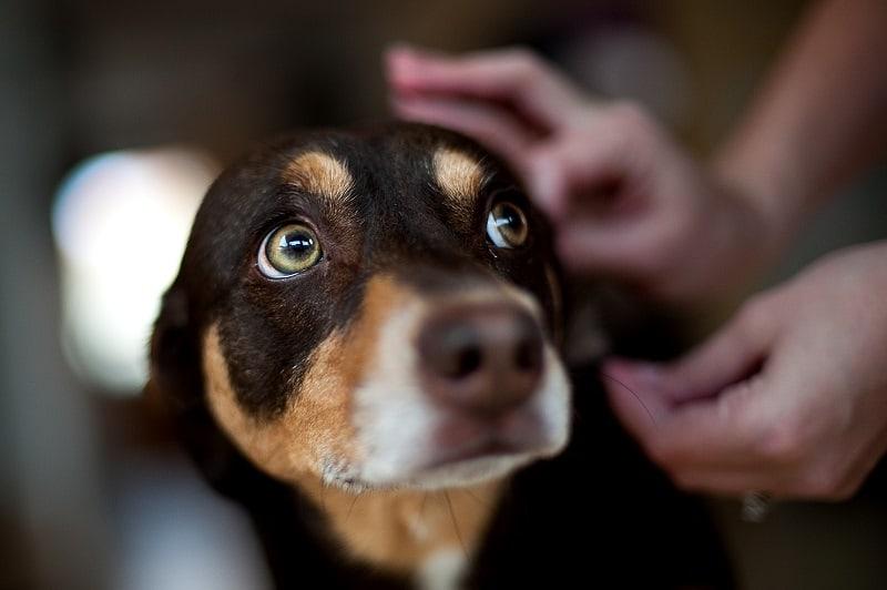 common dog illnesses