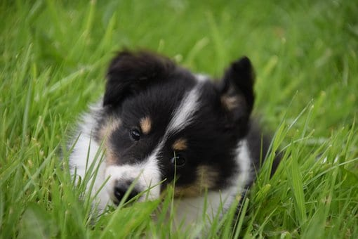 dogs likes the taste of grass