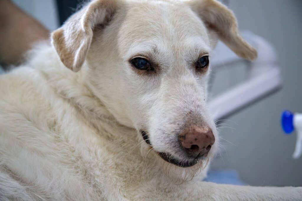 treat dog diarrhea with natural remedies