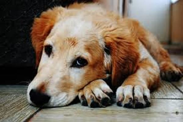 Symptoms of Poisoning in Dogs