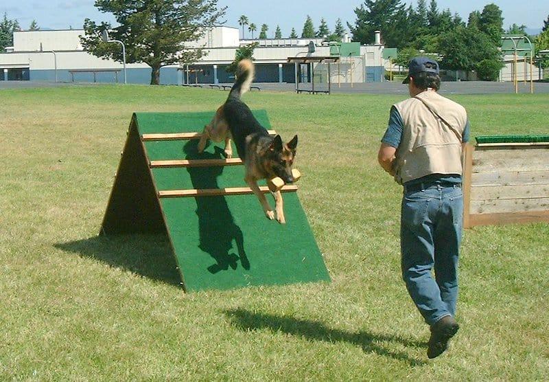 dog training exercises