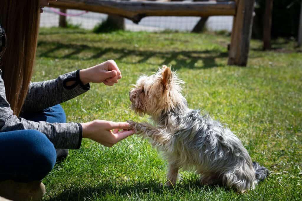 puppy dog training tips