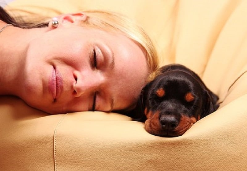 diseases of the endocrine system in dogs