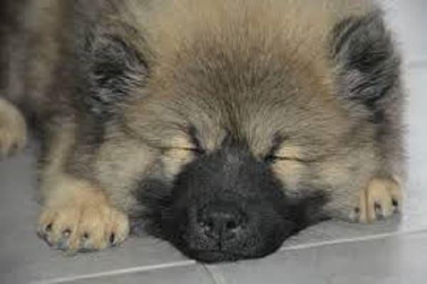 dog is sleeping