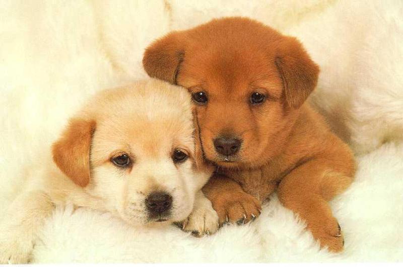 premature death in puppies