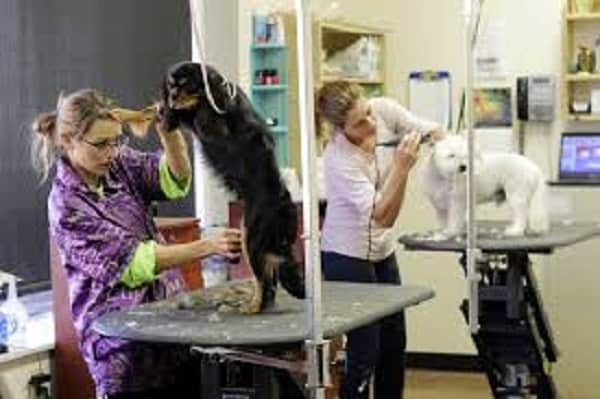 professional grooming table for dogs