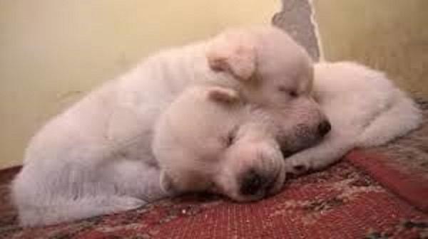 Parasitic diseases in puppies
