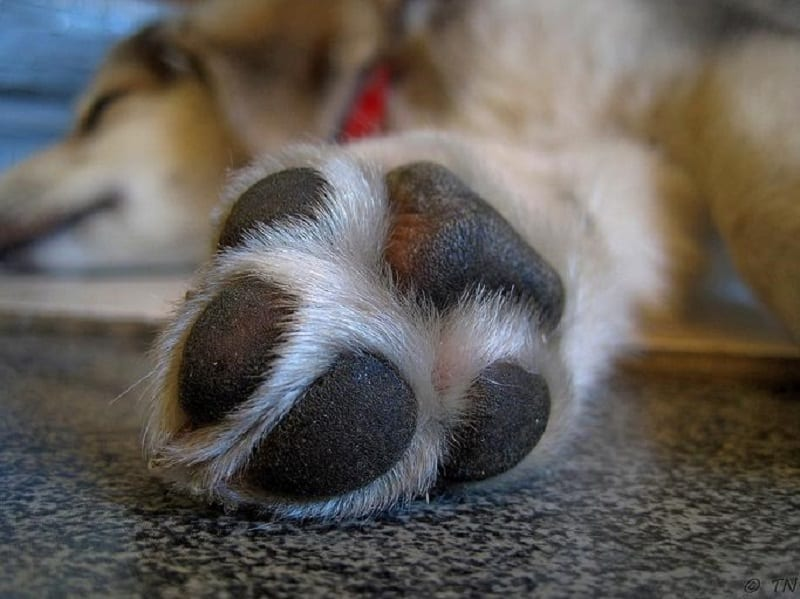 proper care for dog paw pads