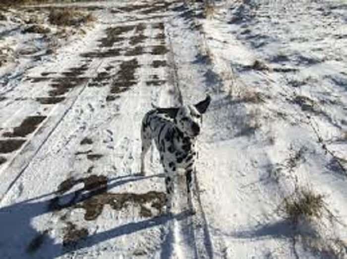dog walking on snowy road