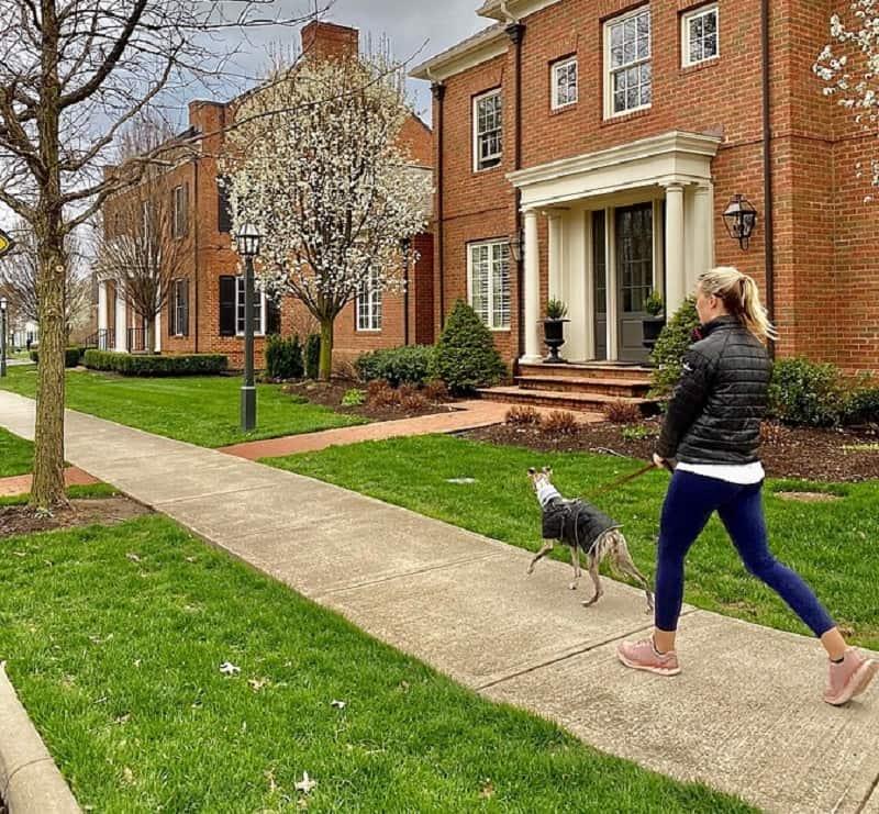 walking your dog in the new neighborhood