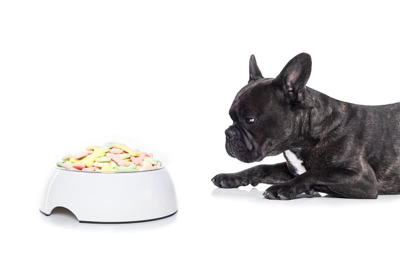 best food for a french bulldog puppy