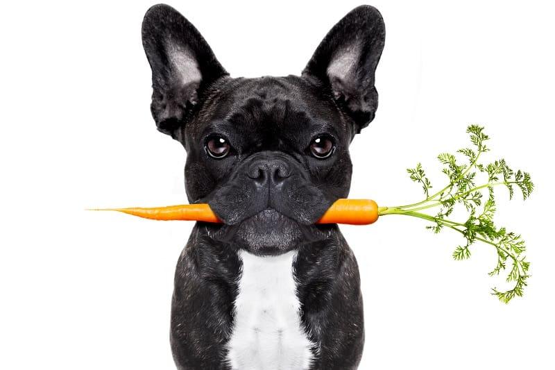 veggies in french bulldog's diet
